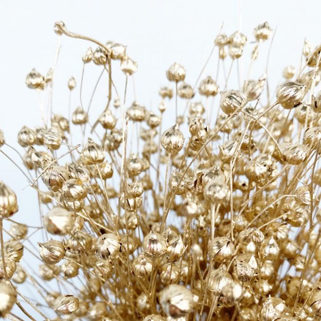 Fleur de lin séché dorée (env 100gr.)