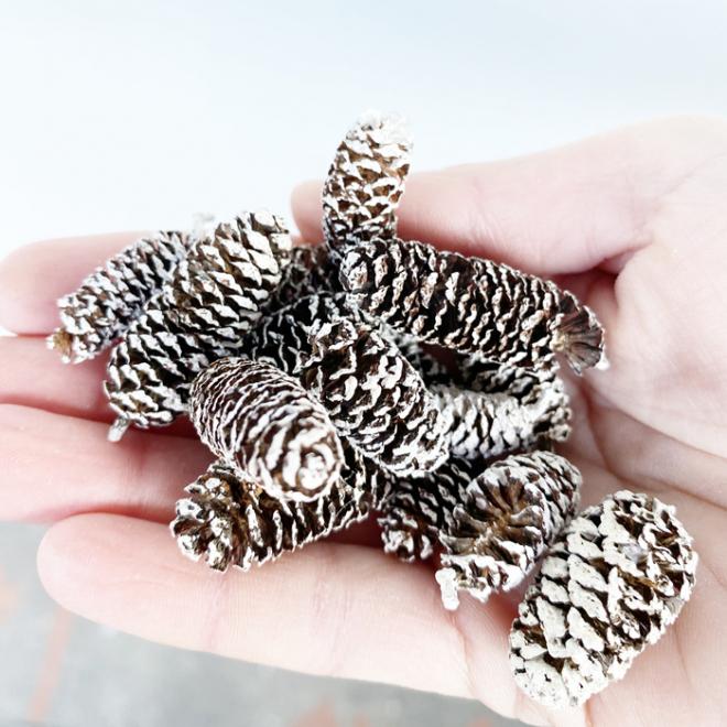 Pommes de pin mini (env 200gr.)