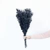 Ruscus stabilisé noir (env 100gr.)