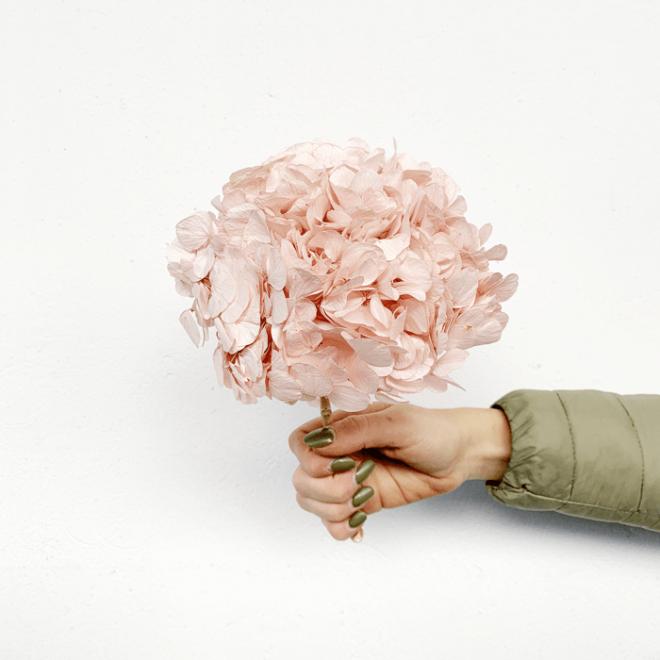 Hortensia stabilisé rose (env 30gr.)