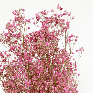 Gypsophile stabilisé rose (150gr)