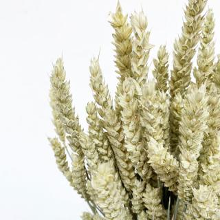 Blé séché naturel (env 200gr.)