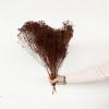 Broom bloom séché marron (env 100gr.)