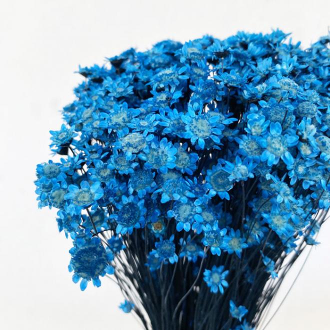 Glixia séché bleu (env 60gr.)