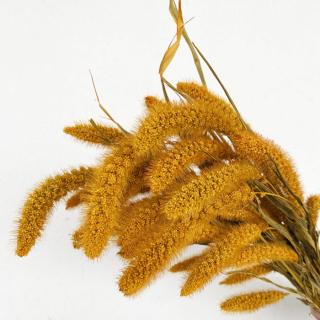 Sétaire séchée jaune (env 125gr.)