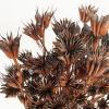 Nigelle orientale séchée marron (env 100gr.)