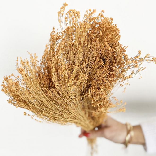 Broom bloom séché corail (env 100gr.)