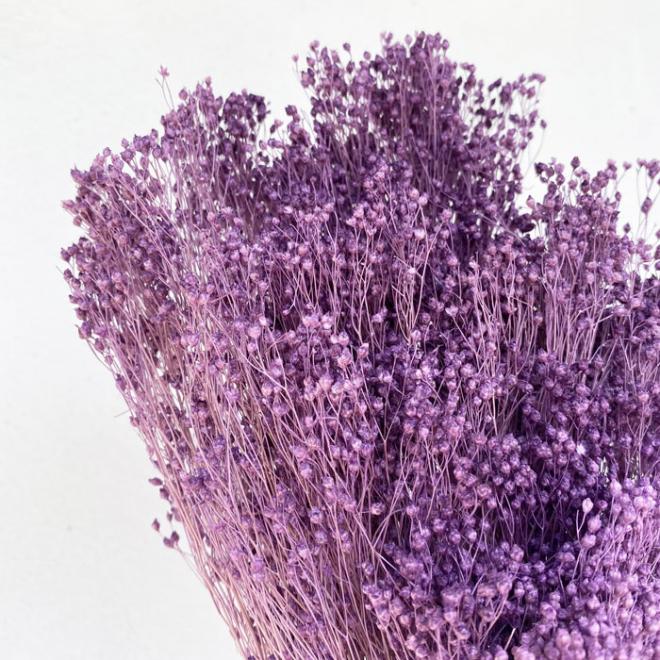 Broom bloom séché lilas (env 100gr.)