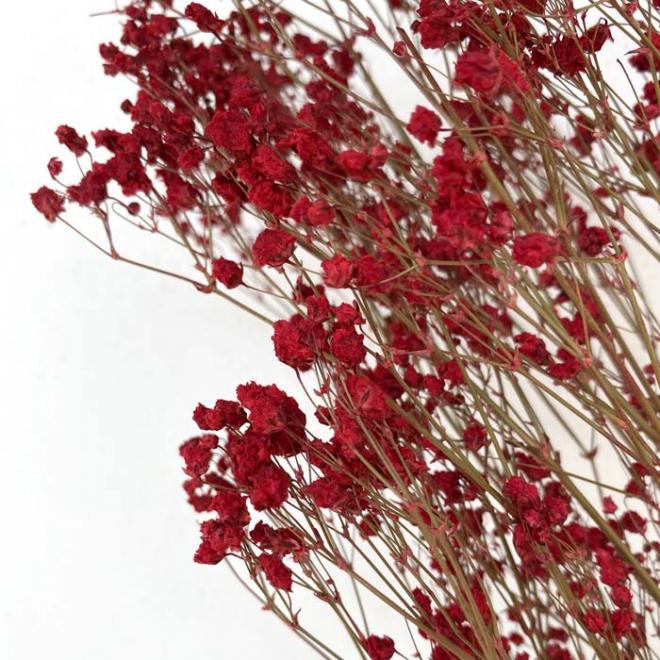 Gypsophile stabilisé rouge (5 tiges)