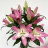 Lys oriental rose (90cm x 5tiges)