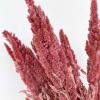 Amaranthe séchée rose (env 100gr.)