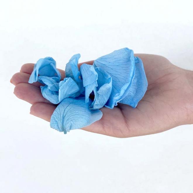 Pétales de roses éternelles bleues