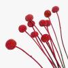 Craspédia séché rouge (10 tiges)
