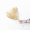 Broom bloom séché crème (env 100gr.)