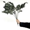Eucalyptus Gunny stabilisé (env 60gr.)