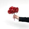 Hortensia stabilisé rouge (env 50gr.)
