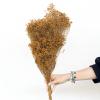 Broom bloom séché terracotta (env 100gr.)