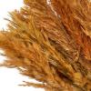 Herbe de pampa orange (env. 10 tiges)
