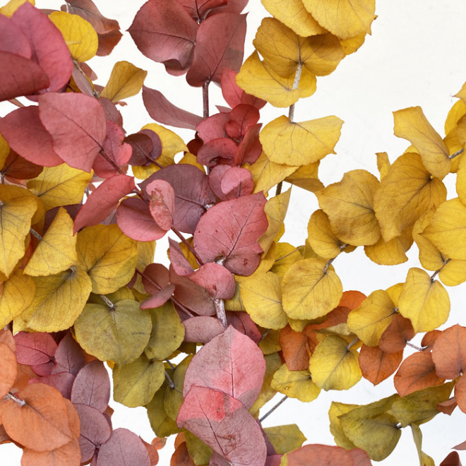 Eucalyptus stabilisé automnal (env 150gr.)