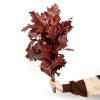 Chêne séché rouge (5 tiges)