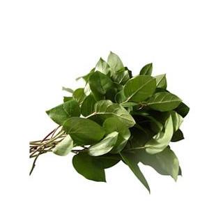 Salaal (10 tiges) - France Fleurs