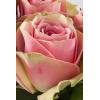 Rose La Belle (20 tiges) - France Fleurs