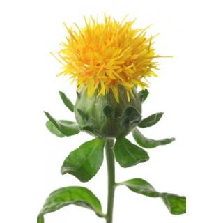 Carthamus 5 tiges - Grossiste fleurs coupees pour particulier ...