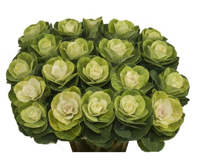 Choux Decoratifs Livraison Choux D Ornements Pour Bouquet France