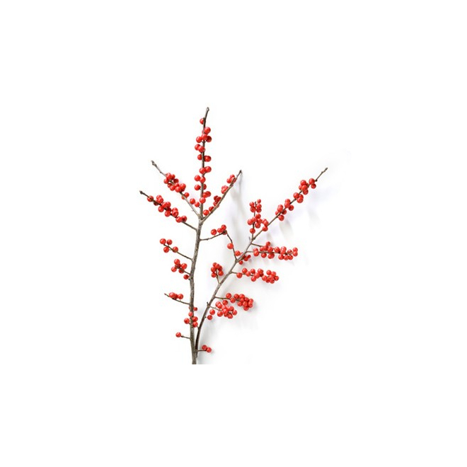 Livraison ilex pas cher achat fleur coup e france fleurs for Livraison fleurs pas cher 10 euros