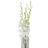 Dendrobium blanc (15 tiges)