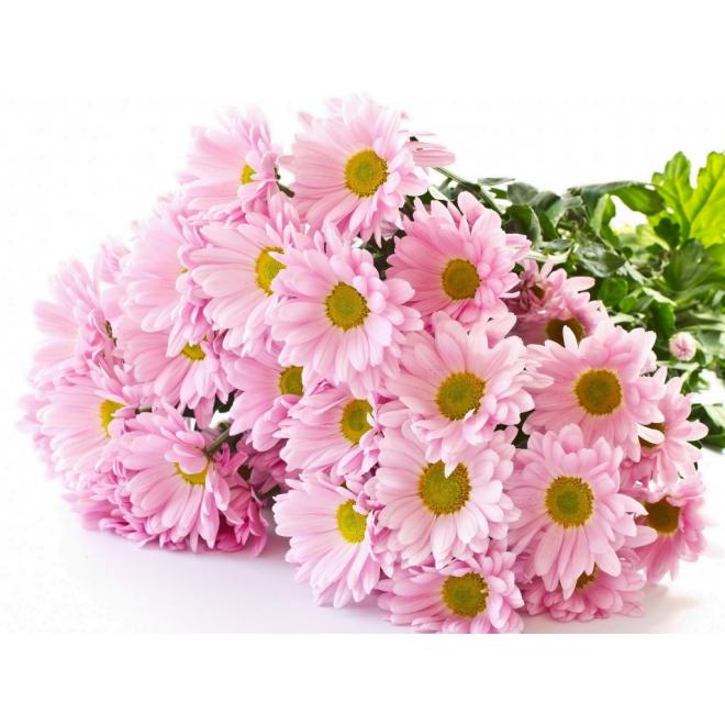 Santini rose - France Fleurs