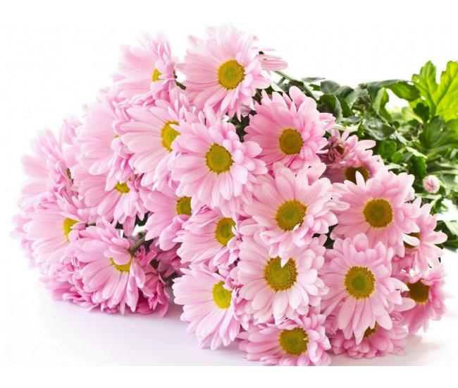 Livraison de santini pas cher livraison fleur coup e for Livraison fleurs pas cher rapide