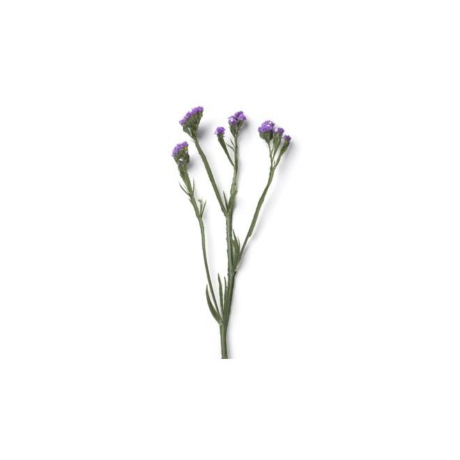 Statice bleu livraison fleurs france fleurs for France fleurs