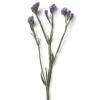 Statice lilas - France Fleurs