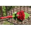 Boutonnière Romantique rouge