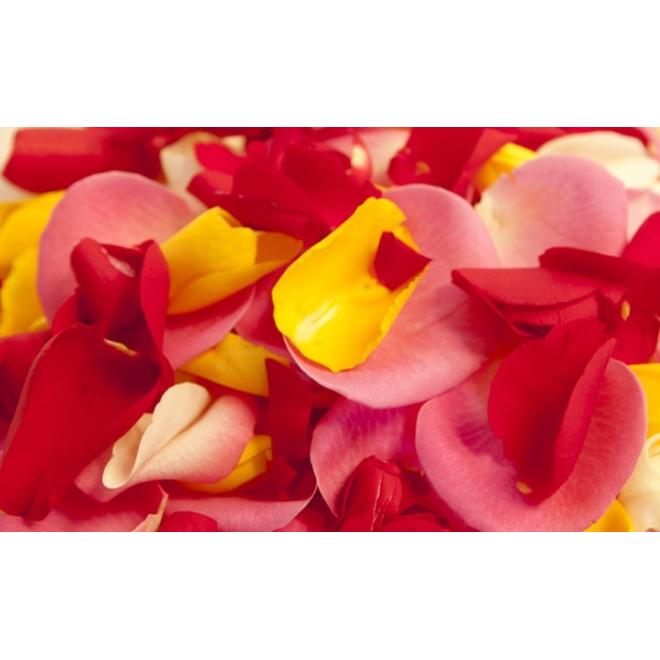 Pétales de roses fraîches x1500