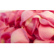 Suggestion de présentation des pétales de roses