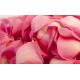 Pétales de roses roses
