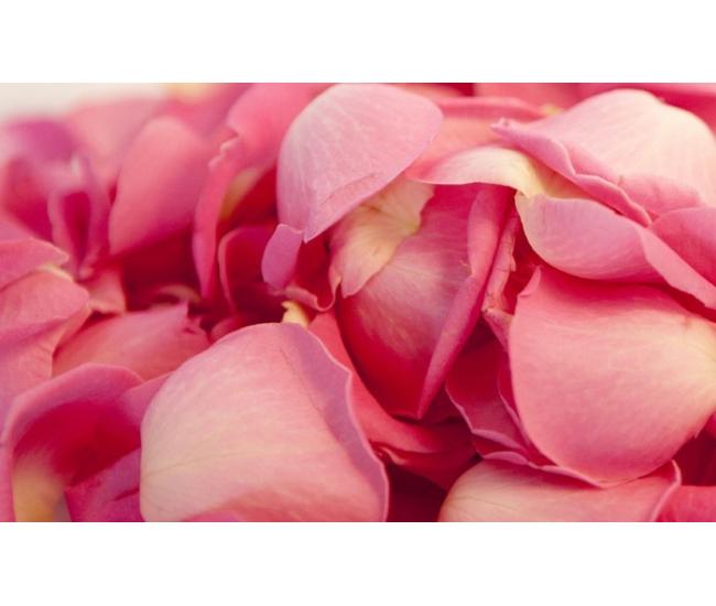 3200 p tales de rose mariage