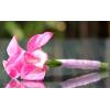 Bouquet demoiselle d'honneur Moderne rose