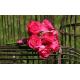 Bouquet demoiselle d'honneur Romantique fushia