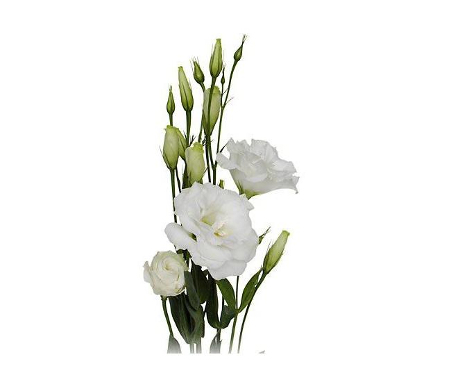 fleur de lisianthus blanc livraison fleur coup e france fleurs. Black Bedroom Furniture Sets. Home Design Ideas