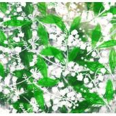 g. Cellophanes Muguet x250 (feuilles)