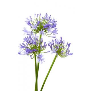 Livraison fleurs et feuillages en gros pour particuliers - Grossiste fleurs coupees pour particulier ...