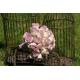 Bouquet de mariée Roses Memory Lane - France Fleurs