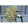 Bouquet de mariée Délicat