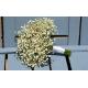 Bouquet de mariée 82