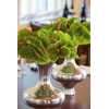 Anthurium vert en situation - France Fleurs