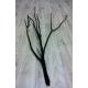 Mitsumata noir (lot de 3 branches)