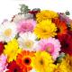 Bouquet de germinis - France Fleurs